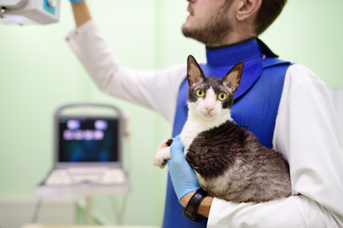 Cat in arms of doctor